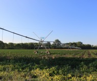 Soy_Bean_Field_with_Central_Pivot_Irrigation_Sprinkler_Summerfield_Township_Michigan.JPG