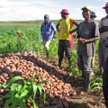 Angolan_Potato_Farmers_(5687186090).jpg