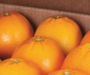 Sappi.OrangesPackedLid_-_Copy_2.jpg