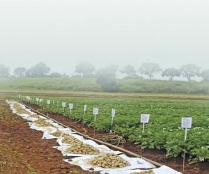 potatoIndustry.jpg