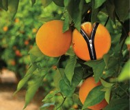 citrus_zip.jpg
