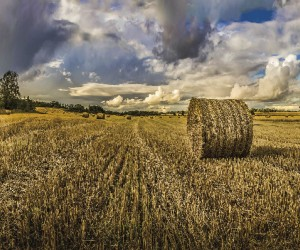 Barley Field1.png