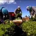 farmworkers_1227834a.jpg