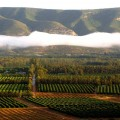 organic-citus-farming-south-africa.jpg
