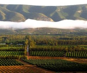organic-citus-farming-south-africa.jpg
